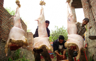 Butchers slaughtering sheep -- Photo:Bilal Bahadur.