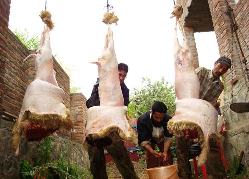 Butchers slaughtering sheep -- Photo:Bilal Bahadur.