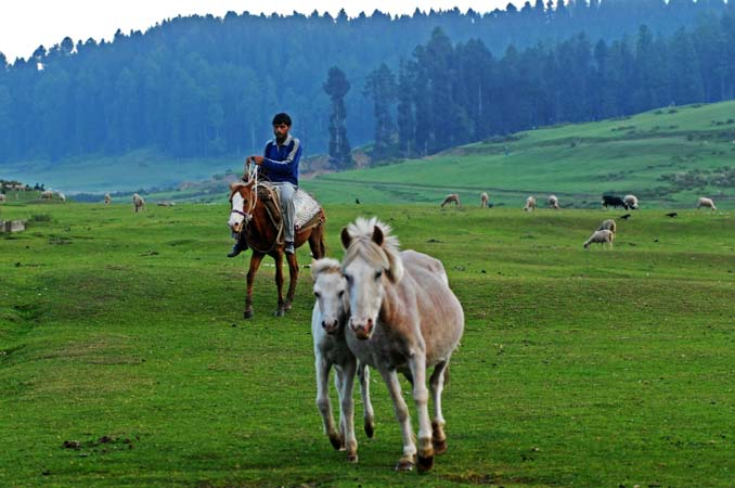 rural and urban life in pakistan essay