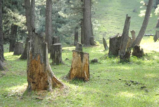 Image result for kashmir environment damage