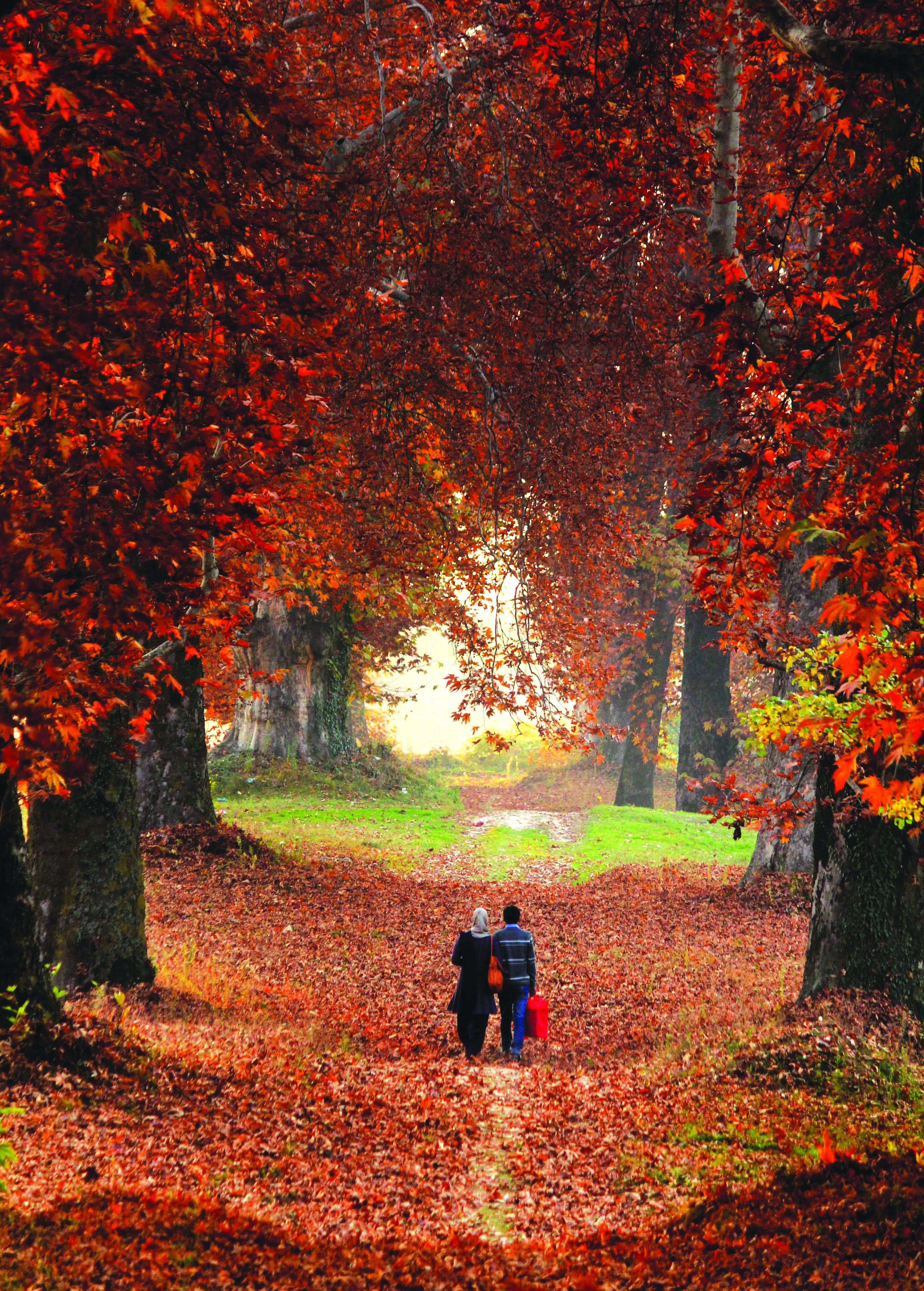 the autumn tears