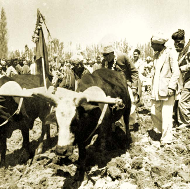 A November 1949 photograph showing Sheikh Mohammad Abdullah, Prime Minister of J&K, ploughing in a field as part of his 'Grow More Food programme'.
