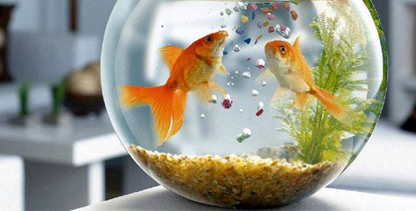 Underground Fish Aquarium, Aqua Park to be setup in Srinagar