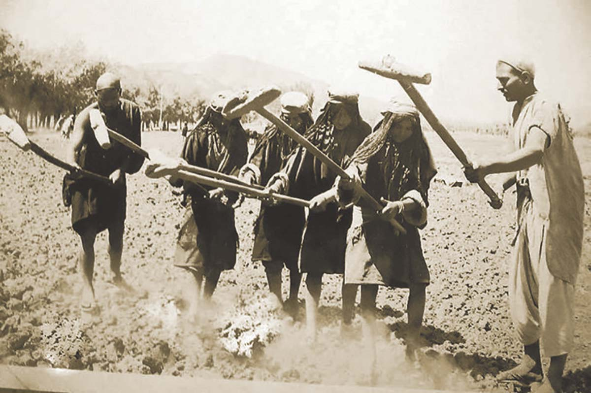 A pre-partion photograph showing the men and women busy in field harrowing.