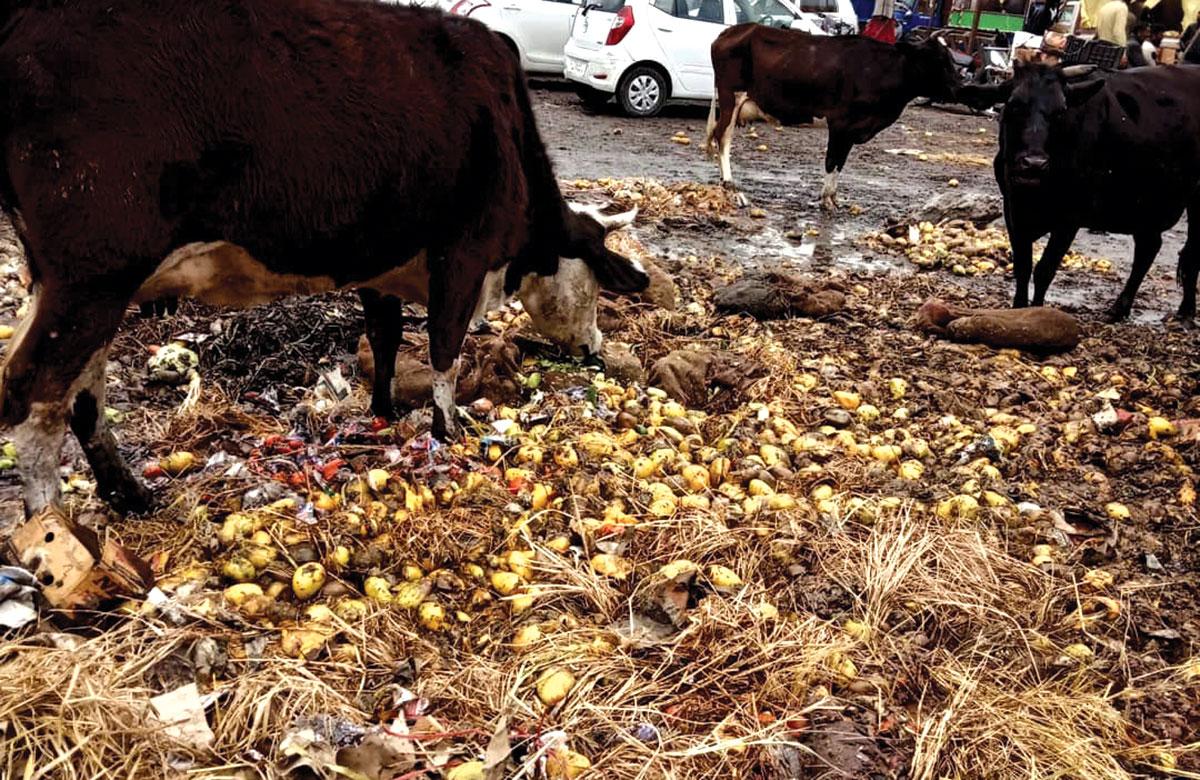 Damaged Fruits and vegetables. KL Image by Bilal Bahadur