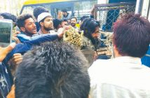 Wildlife In Kashmir Politics Two-leopards-caught-in-Budgam-village kashmir life discourse